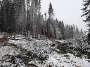 Afacerişti din Slatina şi Mălini au făcut bani grei din exploatarea pădurilor şi jonglerii financiare
