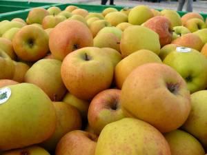 La licitaţie s-au pus la bătaie 1,72 de milioane de lei pentru merele preşcolarilor şi elevilor