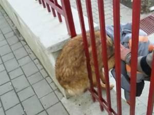 Echipajul a găsit căţelul prins într-un gard al unei grădiniţe, între o bară metalică şi zidăria temeliei