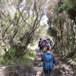 Patru suceveni au ajuns pe Kilimanjaro, acoperişul Africii