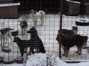 Până la jumătatea lunii februarie au fost capturaţi peste 1.200 de câini