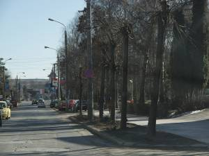 Copacii vor fi tăiați pentru amenajarea de parcări cu pavele