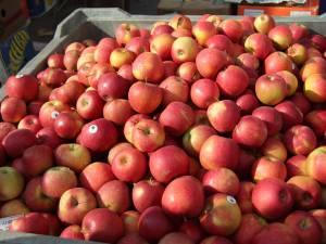 Licitaţia pentru atribuirea merelor către preşcolari şi elevi în cadrul programului de încurajare a consumului de fructe proaspete pare blocată la mantinelă