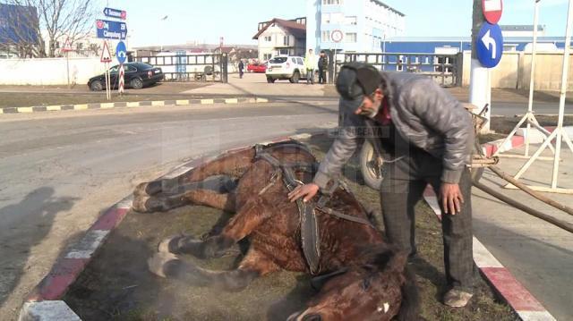 Un cal sleit de puteri a căzut în drum, la Şcheia