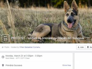 Proteste organizate pe Facebook de iubitorii de animale din Suceava