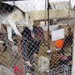 Voluntarii germani, muncind să ofere condiţii cât mai bune câinilor din adăpostul de animale al Sucevei