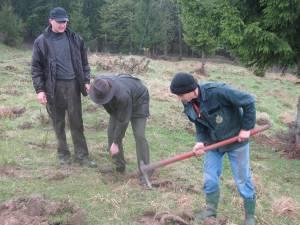 Direcţia Silvică Suceava va planta în campania de împădurire din această primăvară aproximativ şapte milioane de puieţi forestieri