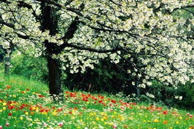 Primăvara se scurtează cu 30 de secunde pe an