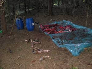 Masacrul lăsat în urmă de braconieri