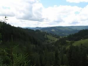 Pădurea, o sursă de venit, chiar de nu este tăiată