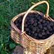 Gustos şi sănătos - Culturile de arbuşti fructiferi, sursă de bani, dar mai ales de sănătate, accesibilă tuturor