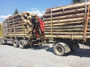 Vehiculul greu transporta buşteni a căror lungime depăşea cu mult perimetrul remorcii