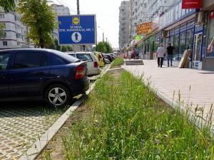 Neîngrijite cum trebuie, spaţiile verzi nou-create s-au transformat în junglă urbană