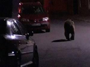 Un urs s-a plimbat sâmbătă noapte nestingherit pe străzile Sucevei