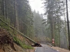 Mai multi copaci au fost smulşi de vânt şi au căzut pe carosabil