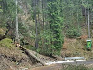 Mai mulţi copaci au fost smulşi de vânt şi au căzut pe carosabil