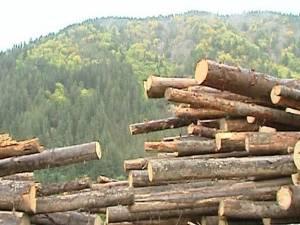 Transport de peste 42 de metri cubi de lemn fără acte, confiscat de poliţişti