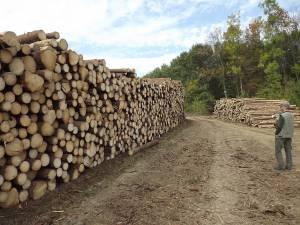 La licitaţia care a fost boicotată se scot la vânzare cele mai mari cantităţi de masă lemnoasă care pot fi exploatate în Suceava în 2016