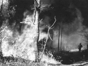"""""""Pădure incendiată"""""""