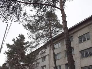 Municipalitatea nu mai poate toaleta arborii