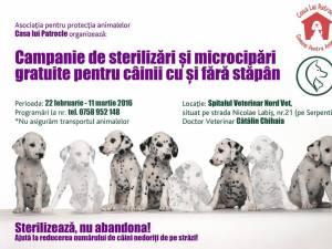 """O sută de câini, sterilizați și microcipați gratuit de Asociația """"Casa lui Patrocle"""""""