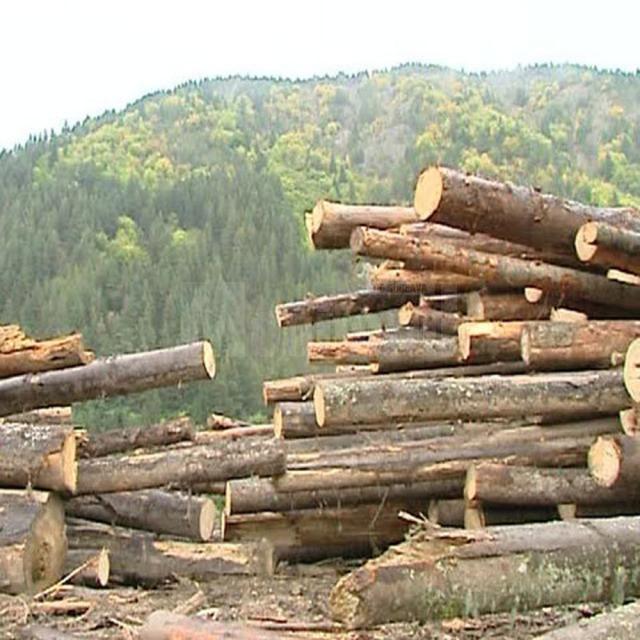 Opt amenzi după controale la zece societăţi ce prelucrează sau exploatează lemn