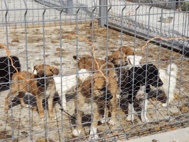 Colectă pentru câinii comunitari
