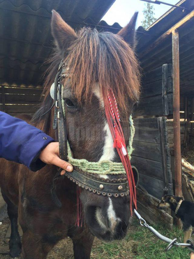Calul abandonat a fost predat de poliţiştii locali unei Asociaţii de Protecţia Animalelor