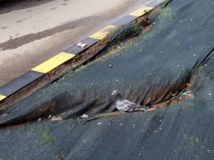 La Km 0 al Sucevei, lângă parcarea subterană, spaţiul verde a fost distrus de un ghiolban care a urcat cu maşina pe el