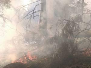 Incendiul a fost pe raza comunei Dorna Candrenilor