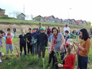 Elevii au plantat peste 300 de puieţi de molid