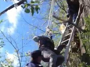 Pompierii l-au asigurat pe tânăr şi l-au coborât în siguranţă din copac