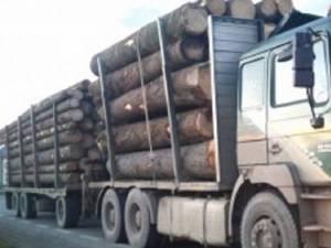Au fost confiscaţi 238 metri cubi material lemnos, valoarea estimată a cantităţii fiind de 100.000 de lei