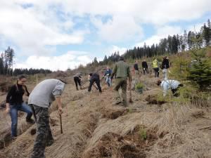 Lucrări de regenerare a pădurilor au fost executate pe o suprafaţă de 2.180 de hectare