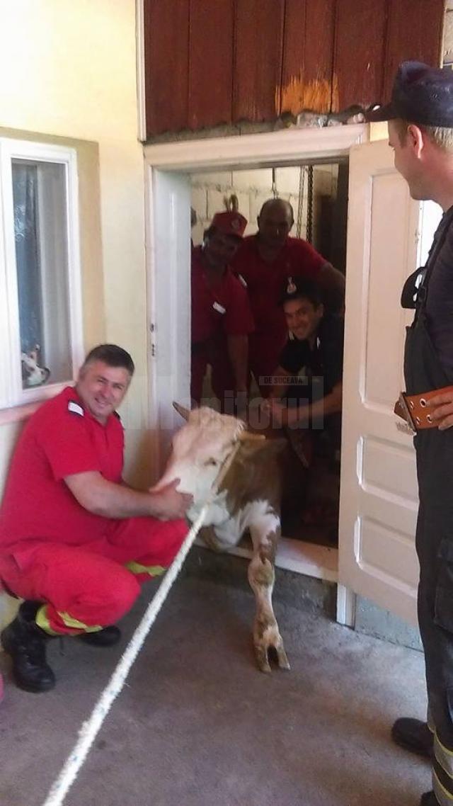 Văcuţă căzută într-un beci, salvată de pompieri
