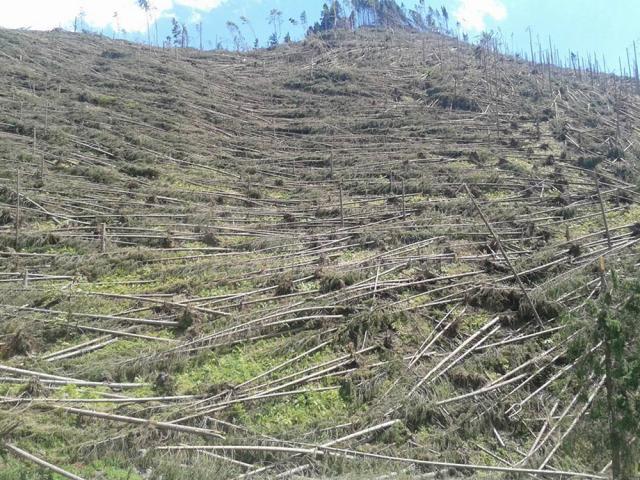 Aproape 500.000 de arbori au fost puşi la pământ