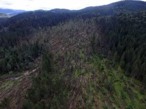 Volumul masei lemnoase puse la pământ este estimat la cca. 24.000 metri cubi