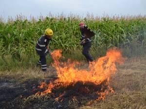 Cinci incendii de vegetaţie uscată într-o singură zi