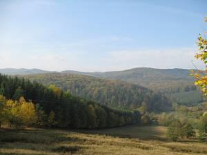 Pentru tăierea de arbori din pădurile virgine amenda este cuprinsă între 20.000 şi 30.000 de lei