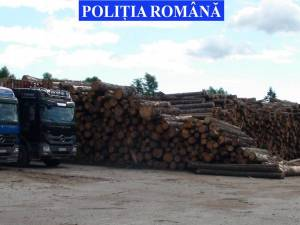 Materialul lemnos care a fost confiscat