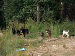 """Câini comunitari între Campusul de la Liceul Sportiv și Casa pentru copii """"Colț Alb"""""""