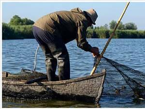 """""""Recoltarea peştelui"""""""