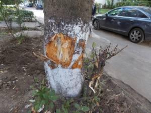 Arbore lovit de un muncitor cu toporul, pentru a fi tăiat