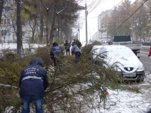 Pe bulevardul George Enescu mai mulți copaci de mici dimensiuni au căzut peste mașini