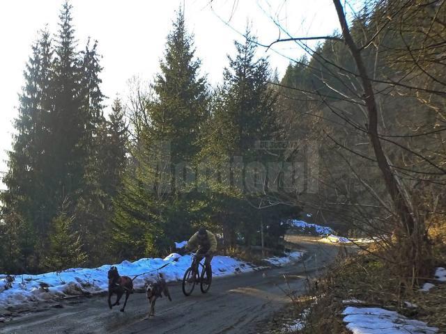 Pascu a concurat împreună cu Erik, un ciobănesc belgian Malinois, şi Ajak, un tânăr Husky Siberian aflat la prima competiţie de acest gen