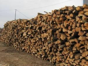 Garda Forestiera a dispus confiscarea contravalorii a 172 de metri cubi de material lemnos