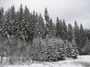 Cod galben de ninsoare în judeţul Suceava