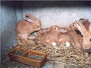 """""""Vor creşte iepuri de casă"""""""