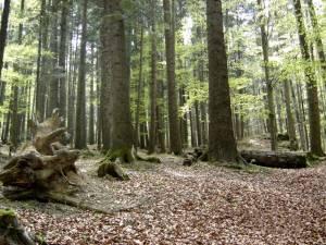 Asociaţia din Gălănești are în administrare 66 de hectare de pădure