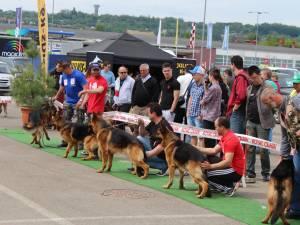 Bucovina Dog Show la Shopping City Suceava